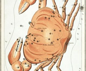 Cancer Constellation; Astrology Star Chart; Zodiac Engraving by Sidney Hall, an item from the 'Zodiac Shrine' hand-picked list