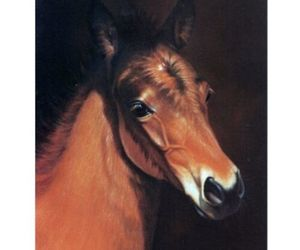 """Baby Face"" - Head of a Foal - 6 Pack of Blank Cards - Print by Jean Barrows, an item from the 'Community Picks: Horsin' Around' hand-picked list"