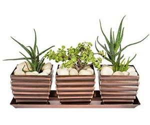 H Potter Herb Succulent Planter Plant Pots Window Sill with Tray Outdoor Indoor , an item from the 'Pretty Planters' hand-picked list
