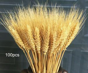100pcs Real Wheat Ear Flower Natural Dried Party Craft Home Decor Wheat Bouquet, an item from the 'Home Decor' hand-picked list