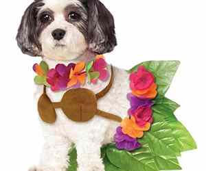 Hula Girl Hawaiian Tropical Luau Beach Fancy Dress Halloween Pet Dog Cat Costume, an item from the 'Community Picks: Dog Days of Summer' hand-picked list
