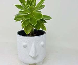 Succulent in Creative Face Pot by JMBAMBOO, an item from the 'Indoor Garden' hand-picked list