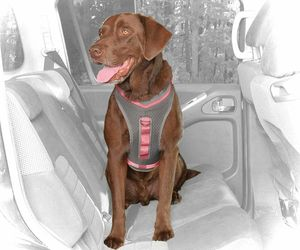 Kurgo Gray & Coral Journey Dog Harness, Medium By: Kurgo, an item from the 'Dog Costumes and Toys' hand-picked list