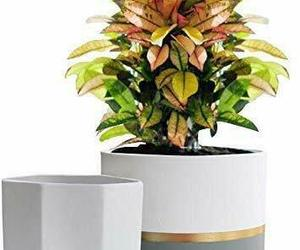 白色陶瓷花盆花园花盆6.5英寸装2室内,植物容器,来自'Pretty Planters' hand-picked list