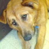 BrassDog's profile picture