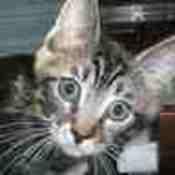 treasurecart's profile picture