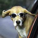 dogSPAdog's profile picture