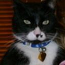 ShadowKitty's profile picture