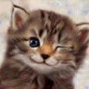 norish2000's profile picture