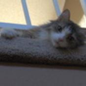mysamcat's profile picture