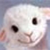 lamylouy's profile picture