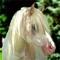 Pony thumb48