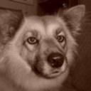 adoptastray's profile picture