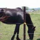 emmamom5057's profile picture