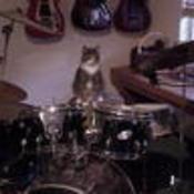 Catdrummer5 thumb175