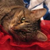 HeliotropeBouquet's profile picture