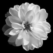 njonkman's profile picture