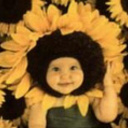 Sunflower4 1 thumb128
