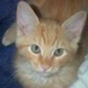 tigger's profile picture