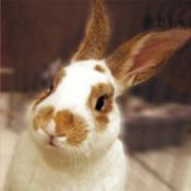 Bunny 20pic 1  thumb175