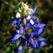 Linda avatar thumb48