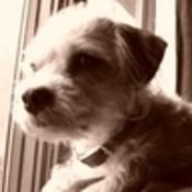 darlina's profile picture
