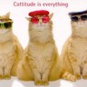 Cattitude thumb175