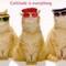 Cattitude thumb48