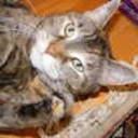 2008_0529catsetc0002_thumb128