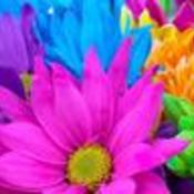 Colorful thumb175