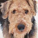 AireHead's profile picture