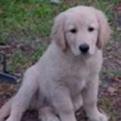 Puppy thumb175
