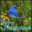 Felicitations's profile picture