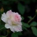 Flower4 thumb128