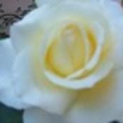 laynesmom's profile picture