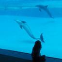 Dolphin blog pix thumb128