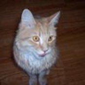 EmeraldPointe's profile picture
