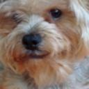 tokidoki's profile picture