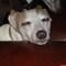 skinnydog's profile picture