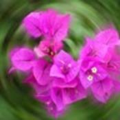 Flower thumb175
