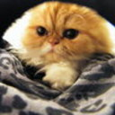 puffalumpersians's profile picture