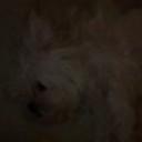 authgurl's profile picture