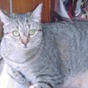 debvor's profile picture