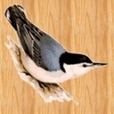 Nuthatch3 thumb128