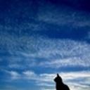 chelsea54's profile picture