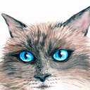 thatcat73's profile picture