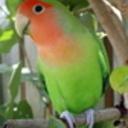 CMThomas's profile picture