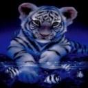 Tigerblank02avatar thumb128