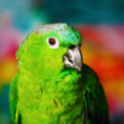 platinumsm's profile picture