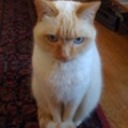 dmasucci1's profile picture